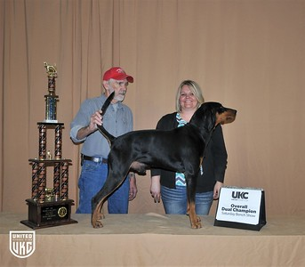 2017 American Black & Tan Days Saturday Dual Champion Male