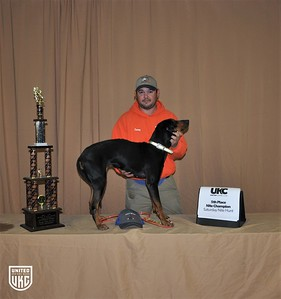 2017 American Black & Tan Days Saturday 5th Place Nite Champion