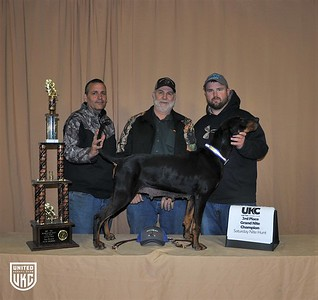 2017 American Black & Tan Days Saturday 3rd Place Grand Nite Champion