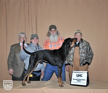 2017 American Black & Tan Days Bench Show RQ