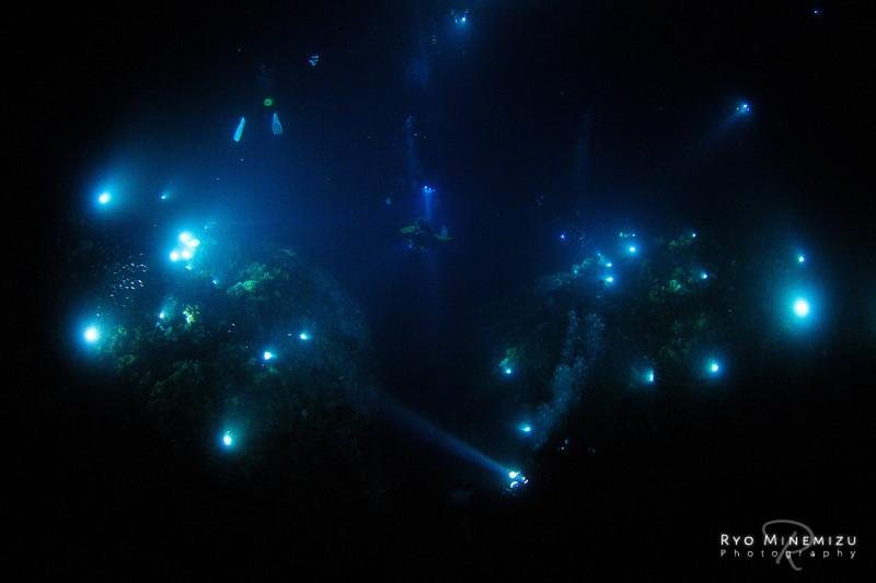 Black Water Dive