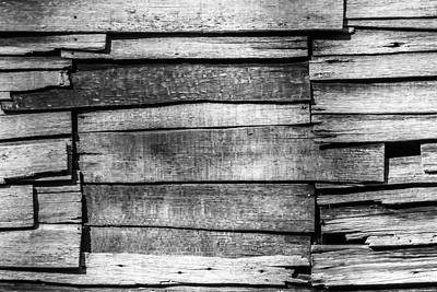 Old Wood Study 17 (BW)