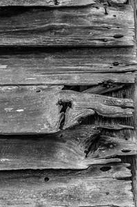 Old Wood Study 27 (BW)