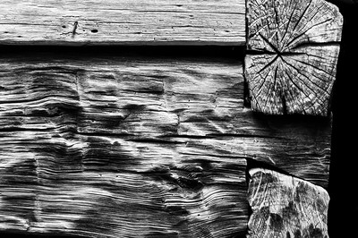 Old Wood Study 24 (BW)