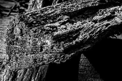 Old Wood Study 10 (BW)