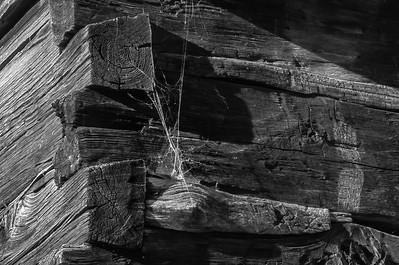 Old Wood Study 13 (BW)
