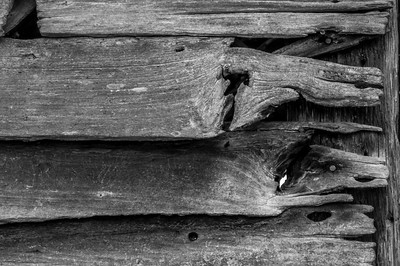 Old Wood Study 30 (BW)
