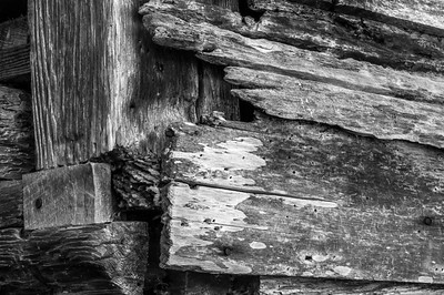 Old Wood Study 31 (BW)