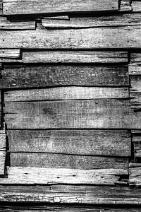 Old Wood Study 19  (BW)