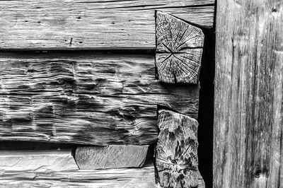 Old Wood Study 25  (BW)