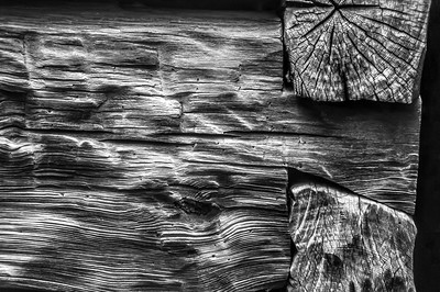 Old Wood Study 22 (BW)