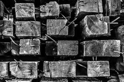 Old Wood Study 03 (BW)