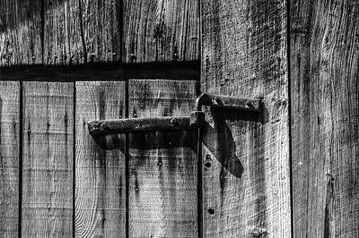 Old Wood Study 07 (BW)
