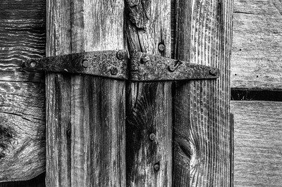 Old Wood Study 23  (BW)