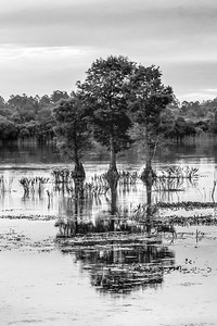 Wetlands Morning 02 (BW)