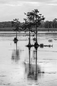 Wetlands Morning (BW)
