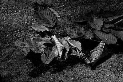 End of Fall 02 - Panthertown, NC (BW)