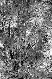 Fall Infrared Patterns - (BW)