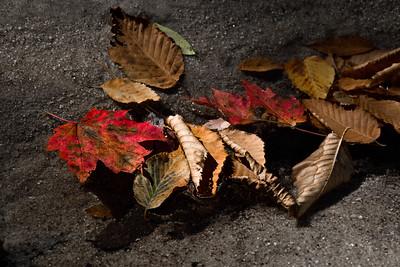 End of Fall 02 - Panthertown, NC (CBW)