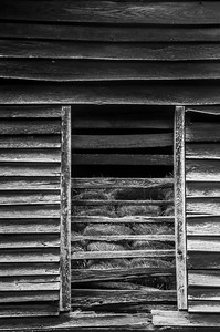 Old Wood Study 33 (BW)