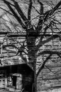 Rustic Barn Study 04 (BW)