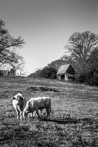Rustic Barn Study 11 (BW)