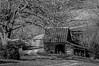 Rustic Barn Study 14 (BW)