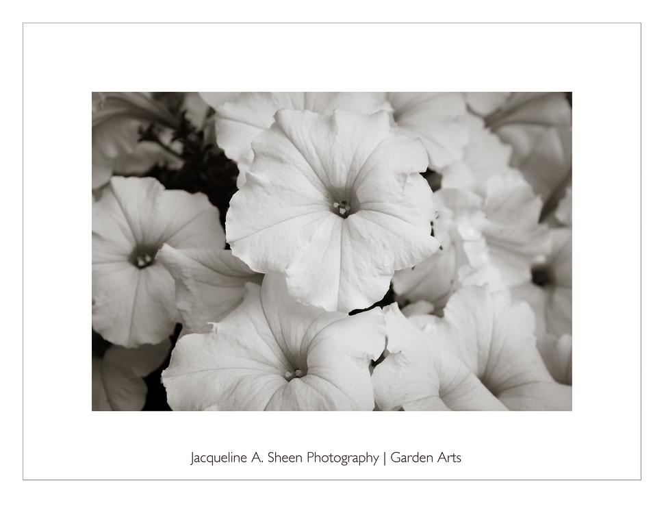 Garden Arts Petunias