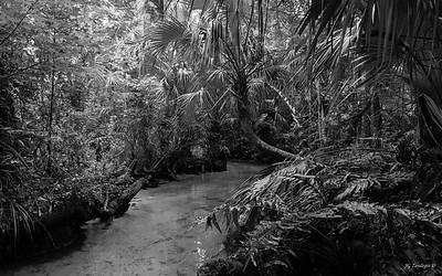 Chassahowitzka River Feeder 1