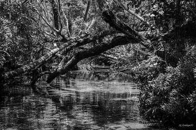 Chassahowitzka River 2