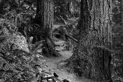 Capilano Trail