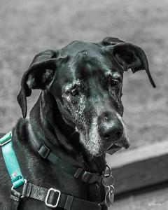 Moxie Portrait