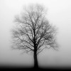 """Tree's in the Mist"" (photography) by Lynn Reinbolt"
