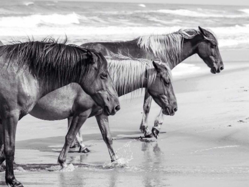 """""""morning rush"""" (photography) by Allyson Marie"""