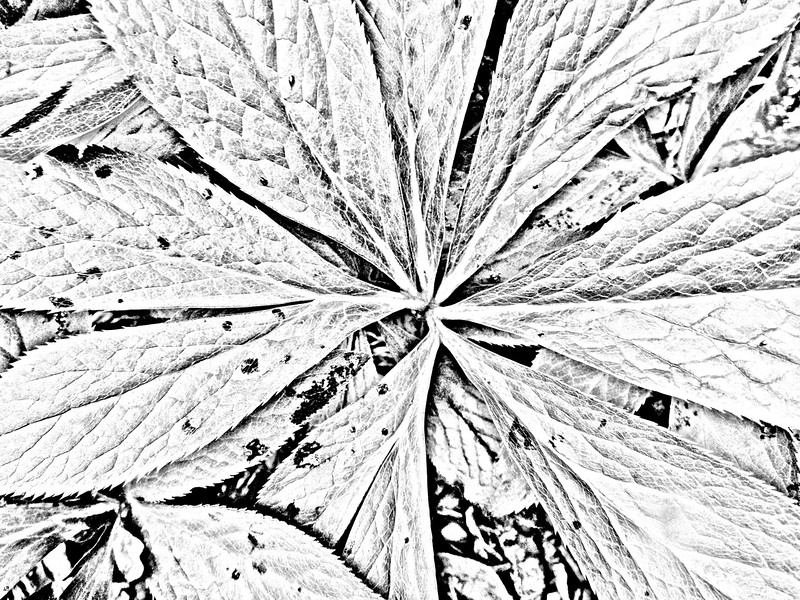 """""""Centered"""" (photography) by Nadine Longmore"""