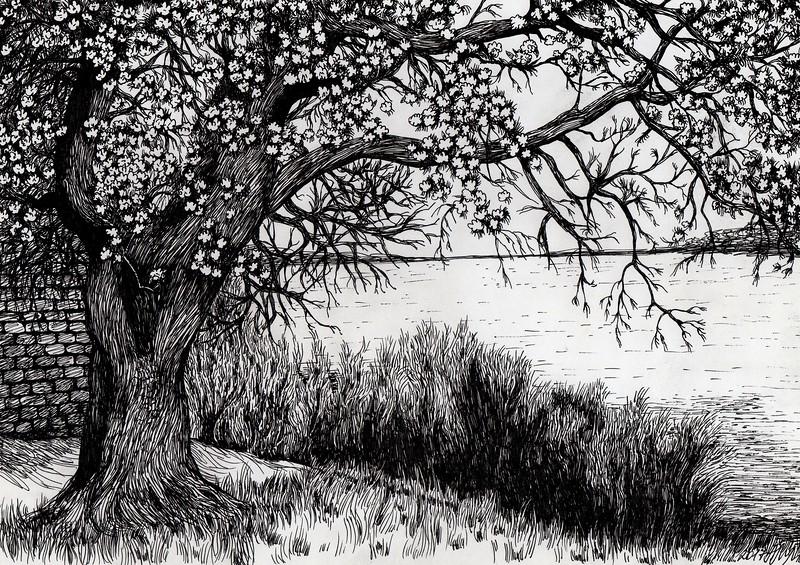 """Spring"" (ink on paper) by Anastasia Mikhailova"