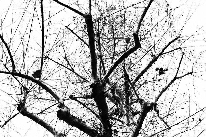 """Vigore"" (photography) by Yuichi Onouchi"