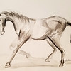 """Horse"" (ink on paper) by Vian Borchert"