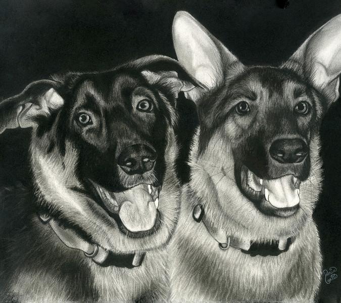 """German Shepherd"" (charcoal) by Denise Carter"