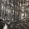 """""""Woodland"""" (ink on paper) by Yinyin Wang"""
