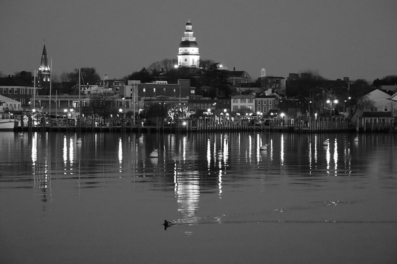 Annapolis City from Eastport and a Passing Duck