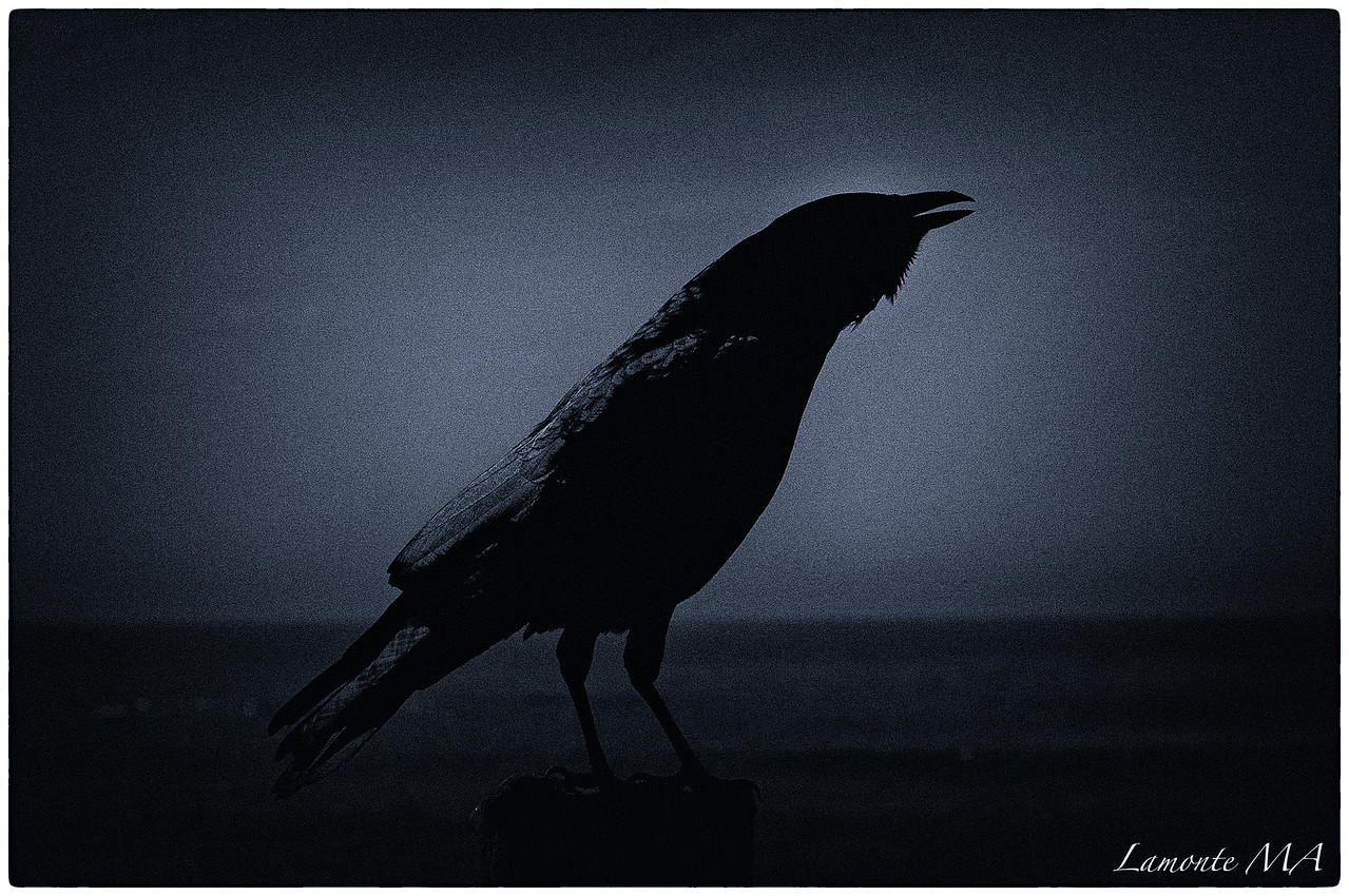 To Crow