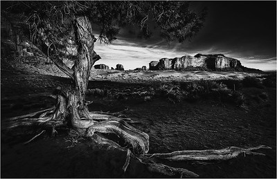Old Tree, Monument Valley A 8x12