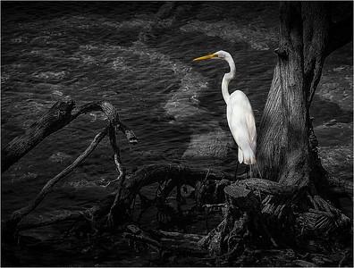 Egret 19b