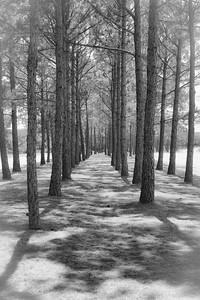 Trees 4123
