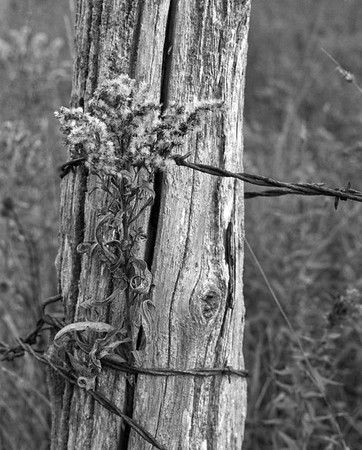 Old Fencepost