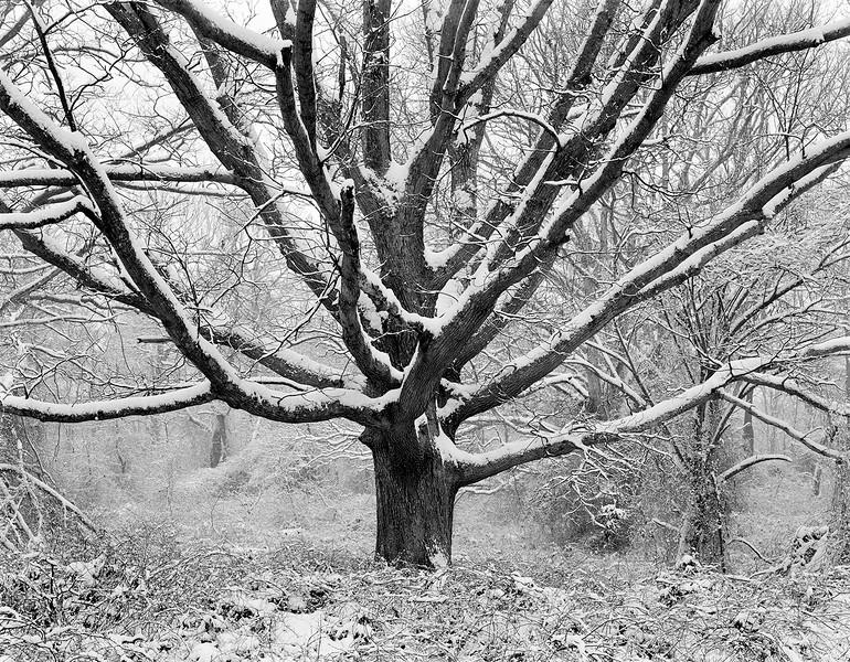 Family Tree In Winter