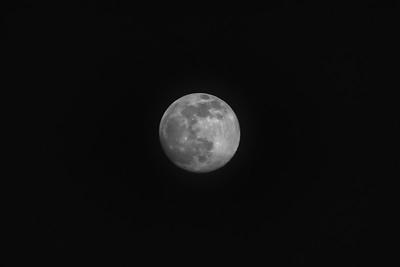 Moon 8950