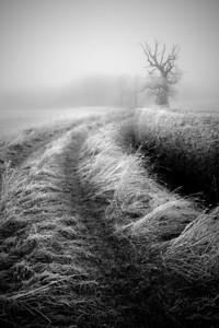 Frosted Field Path