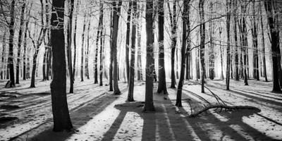 Ashridge Winter Trees